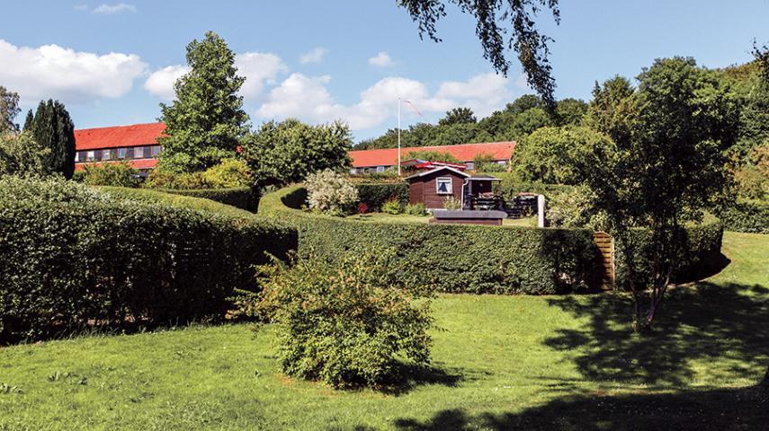 Dekorativt: De ovale haver
